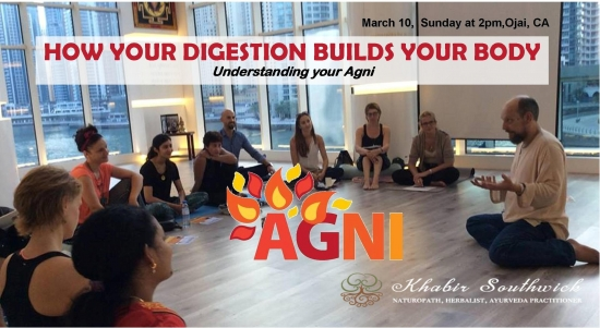 How your digestion creates all your tissue, systems and organs.